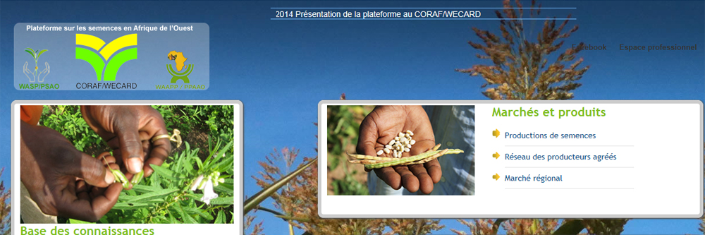Seed system in West Africa: CORAF/WECARD launches an electronic platform on seeds