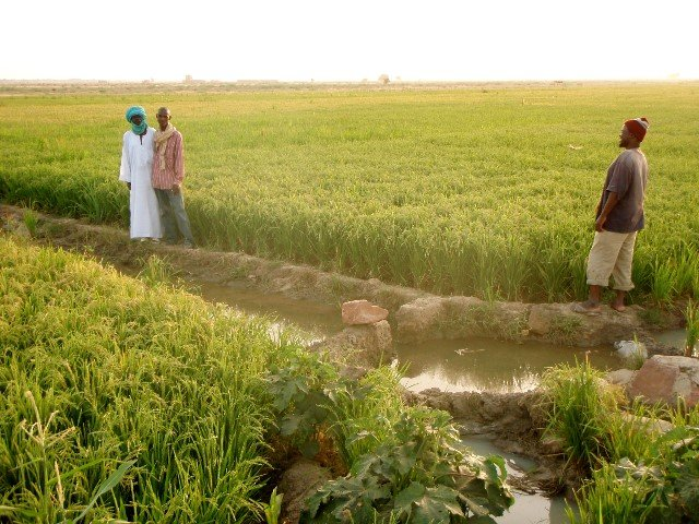 Farmer Mossa Ag Alhousseini (in white) in front of his SRI field
