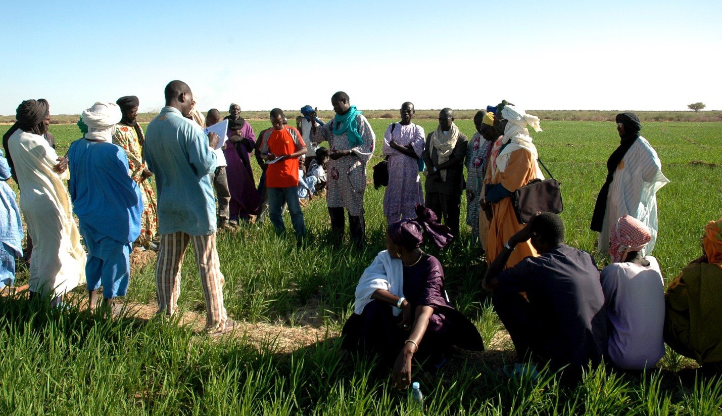 Where it all began: Farmers come to see the first SRI plot in Mali by Mahamadou Hamadoun (on the right in orange with white turban and briefcase), Douegoussou, Timbuktu in 2007